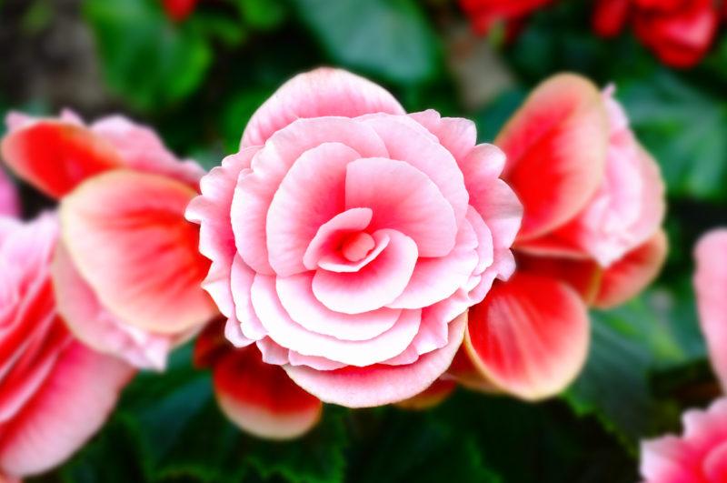 flor 36